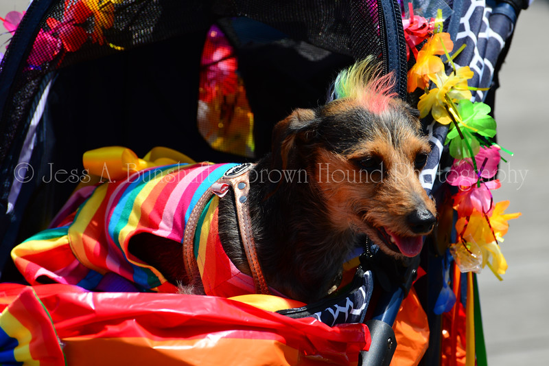 20190622_0019_Pet Pride Parade-a
