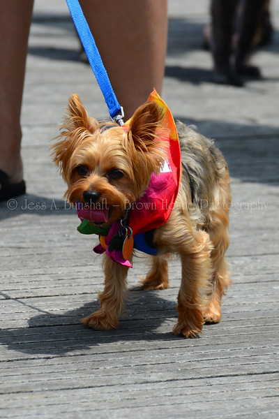 20190622_0157_Pet Pride Parade-a