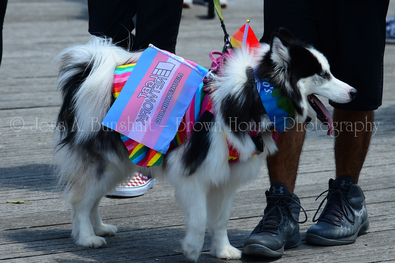 20190622_0025_Pet Pride Parade-a