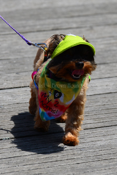 20190622_0023_Pet Pride Parade-a