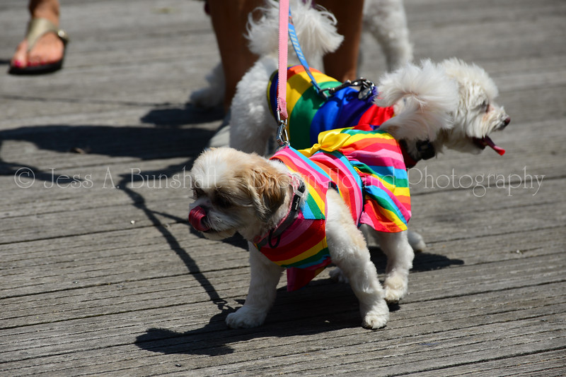 20190622_0029_Pet Pride Parade-a