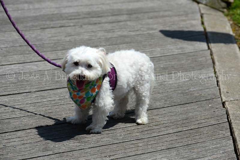 20190622_0123_Pet Pride Parade-a
