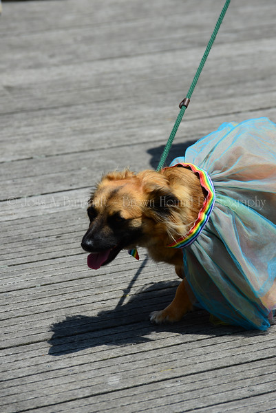 20190622_0100_Pet Pride Parade-a