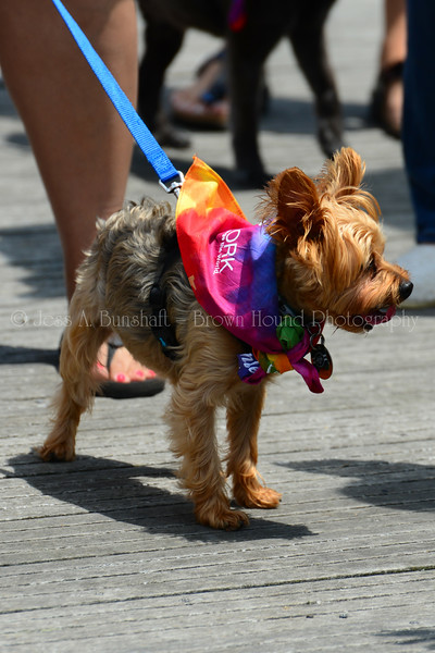 20190622_0155_Pet Pride Parade-a