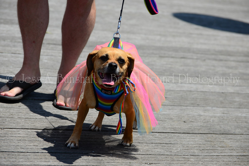 20190622_0032_Pet Pride Parade-a