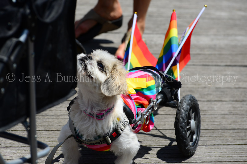 20190622_0031_Pet Pride Parade-a