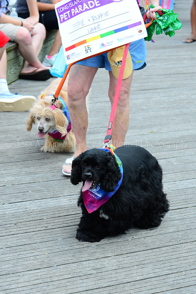 20190622_0078_Pet Pride Parade-a