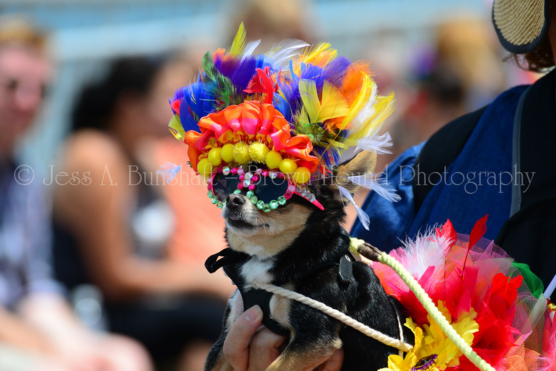 20190622_0142_Pet Pride Parade-a