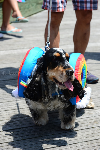 20190622_0066_Pet Pride Parade-a