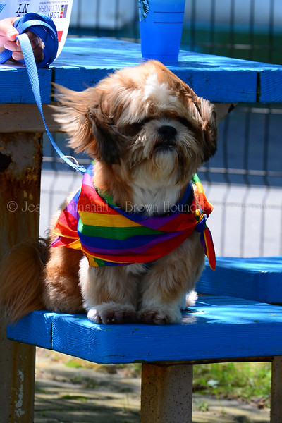 20190622_0005_Pet Pride Parade-a