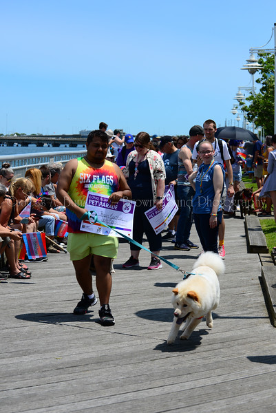 20190622_0058_Pet Pride Parade-a