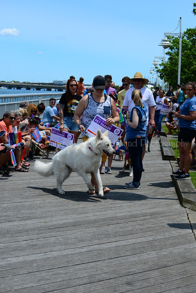 20190622_0102_Pet Pride Parade-a