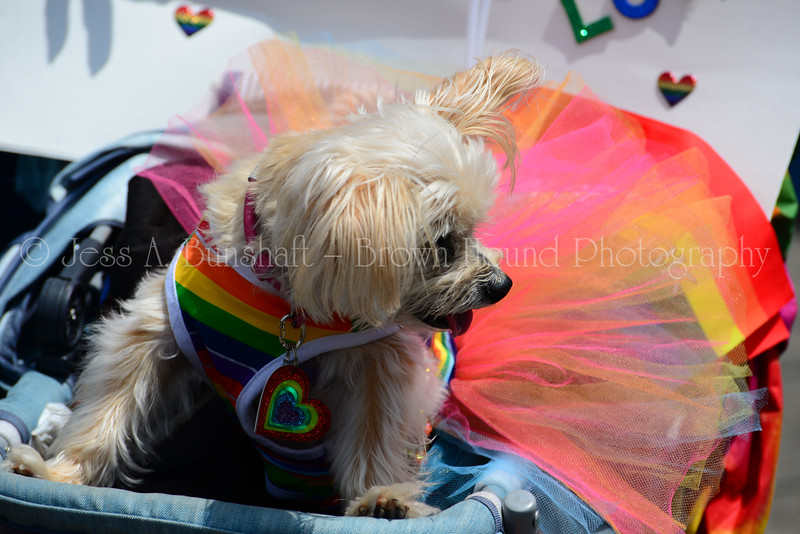 20190622_0140_Pet Pride Parade-a