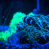 Clown Fish at Jellyfish Restaurant