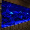Aquarium at Jellyfish Restaurant