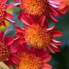 LongWood Gardens0132