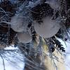 LongWood Gardens0108