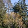 LongWood Gardens0115