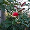 LongWood Gardens0128