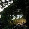 LongWood Gardens0149