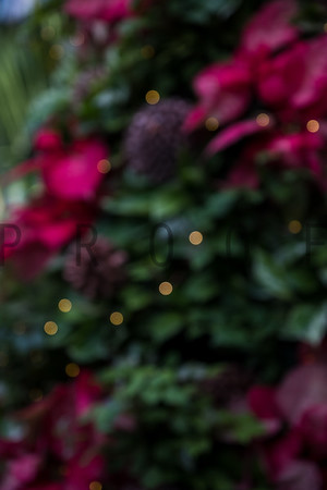 ©Betsy_Barron_PhotographyDSCF1218-4
