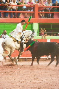 Pedro Louceiro III, first bull.