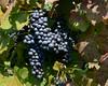 Doukenie Vineyard