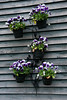 Wall plants at Blooming Hill, LLC.