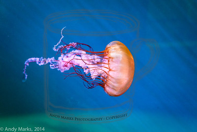 A sea nettle! This was taken at f/4.5, 2500 ISO, and boosted in LR5.