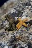 Little Starfish twinkle in the sun.