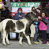 Lowell City of Lights Parade 2019. A pony from the Littleton Hack 'n' Tack group meets spectators. (SUN/Julia Malakie)