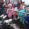 2019 Lowell Winterfest. Front, from left, Bailey Sousa, 10, of Nashua, Abigail Abrams, 5, of Leominster, her sister Alivia  Abrams, 7, and Bailey's brother Cameron Sousa, 9, toast marshmallows, with the Sousas' mother Jillian Sousa, center rear, and Abrams' unofficial aunt, Michelle Kelly of Leominster. (SUN Julia Malakie)