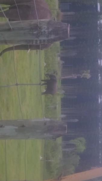 Lowry tampa zoo