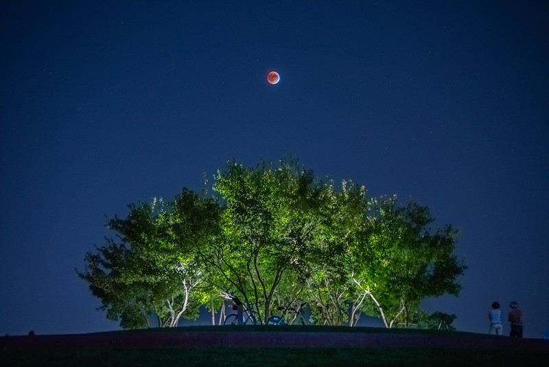 Blood Moon, Total Lunar Eclipse, Trees and Moon
