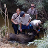 "A series of photos showing a moose in Erie Colorado. The animal was tranquilized and relocated to the mountains.<br /> Photos courtesy the Town of Erie<br /> For more photos go to  <a href=""http://www.dailycamera.com"">http://www.dailycamera.com</a>"