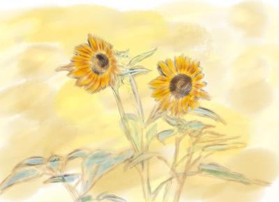 SUN GFLOWERS