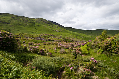 The landscape roamed by our forebears
