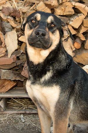 Dog #2