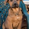 Puppy #6