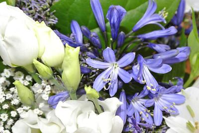 Gratis plantje in den Brico, voor Moederdag...
