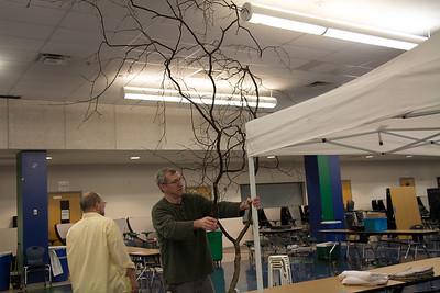 Indoor Tree