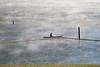 09052010-RDE-swim-ibjc-0005