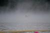 09052010-RDE-swim-ibjc-9524