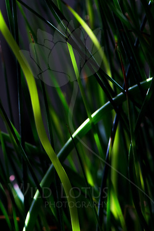 How Green The Sea...<br /> <br /> Plant pictured :: Grass<br /> <br /> Plant provided by :: Tagawa Gardens<br /> <br /> 093012_002496 ICC sRGB 16in x 24in pic
