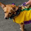 Krewe of Barkus Parade 02 23 2014-351