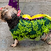 Krewe of Barkus Parade 02 23 2014-287