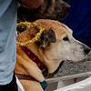 Krewe of Barkus Parade 02 23 2014-538