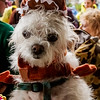 Krewe of Barkus Parade 02 23 2014-243