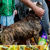 Krewe of Barkus Parade 02 23 2014-852