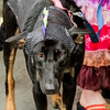 Krewe of Barkus Parade 02 23 2014-300